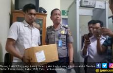 Petugas Gagalkan Penyeludupan 3,3 Kg Ganja di Bandara Jambi - JPNN.com