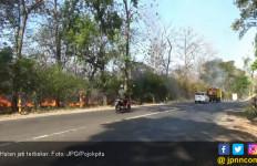 Hutan Jati Perhutani di Pinggir Jalan Lagi - JPNN.com