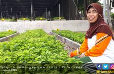 Mengais Rezeki Sambil Menghijaukan Bumi Sriwijaya - JPNN.com