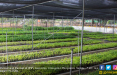 Mengais Rezeki Sambil Menjaga Lingkungan di PP Sukomoro - JPNN.com