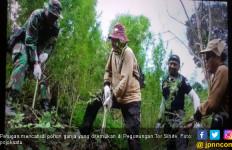 4,5 Hektar Ladang Ganja Ditemukan di Pegunungan Tor Sihite - JPNN.com