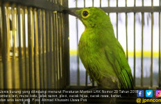 Wanita Pemelihara 443 Burung Langka Dibekuk Polisi - JPNN.com