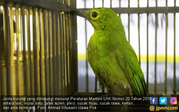 Aturan Baru Bikin Banyak Orang Takut Beli Burung, Oh Kenari - JPNN.com