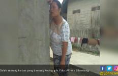 Heboh, Sembilan Warga Pangaribuan Diserang Kucing Gila - JPNN.com