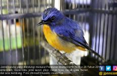 Terbit Peraturan Menteri LHK, Pencinta Burung Tenang ya - JPNN.com
