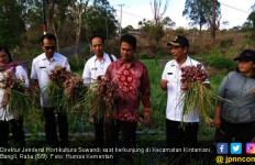 Kementan Sukses Jadikan Bangli Pemasok Bawang Merah Bali - JPNN.com