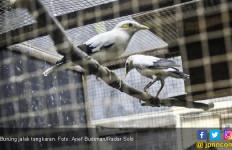 BKSDA Jatim Bantah Ratusan Burung Sitaan Mati - JPNN.com