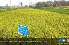 Teknologi Digital Mutlak untuk Tingkatkan Produksi Pertanian - JPNN.com