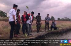 Tim Kirab Satu Negeri GP Ansor Tanam 1.000 Mangrove di Papua - JPNN.com
