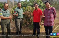 Buah Lokal Indonesia Disukai Masyarakat Guangzhou, Tiongkok Tingkatkan Hubungan Bilateral - JPNN.com