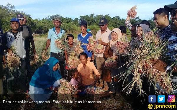 Petani Bawang Merah Riau Terapkan Budidaya Ramah Lingkungan - JPNN.com