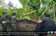 Warga Resah Ada Kera Besar Masuk Sekolah dan Merusak Rumah - JPNN.com