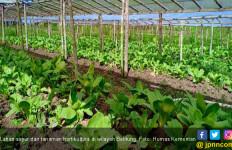 Terkait Impor Hortikultura, Kementan Hanya Beri Rekomendasi Teknis - JPNN.com