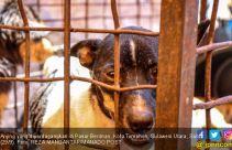 Para Penggemar Daging Anjing, Siap-siap ya - JPNN.com