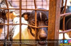 Daging Anjing Laris Manis, Langsung Dieksekusi di Tempat - JPNN.com