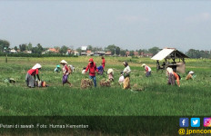 Modernisasi Pertanian Jadi Solusi Regenerasi Petani - JPNN.com