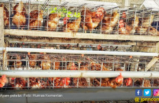 Brasil Laporkan Indonesia ke WTO Terkait Impor Unggas - JPNN.com