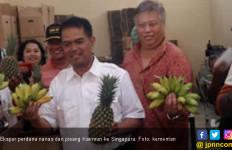 Kementan Ekspor Perdana Nanas & Pisang Karimun ke Singapura - JPNN.com