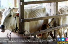 Ketua Dewan Soroti Pengadaan Sapi DOKA di Aceh Tenggara - JPNN.com