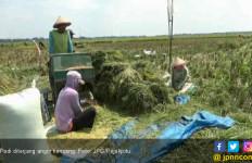 Duh, Padi Puluhan Hektar Dihancurkan Angin Kencang - JPNN.com