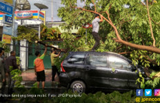 Antar Istri Kerja, Pengendara Mobil Tertimpa Pohon Tumbang - JPNN.com