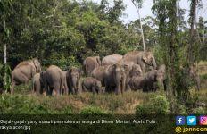 Bukan Cuma Orang, Gajah pun Disensus di Negara Ini - JPNN.com