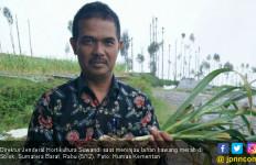 Dari Aceh Sampai Papua, Bawang Putih Mulai Menghampar - JPNN.com