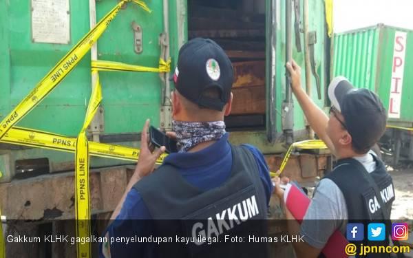 40 Kontainer Kayu Merbau Ilegal Gagal Diselundupkan - JPNN.com