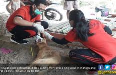 Kementan Gencarkan Vaksinasi Penyebaran Virus Rabies di Bali - JPNN.com