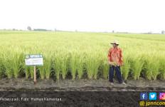 Kementan-FAO Kembangkan Padi Organik di Perbatasan Kalbar - JPNN.com