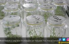 Kementan Terus Kembangkan Benih Hortikultura Bermutu - JPNN.com