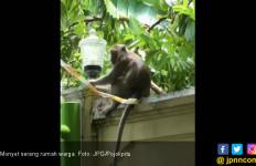 Lima Anak Diserang Kawanan Monyet, Satu Masuk RS - JPNN.com