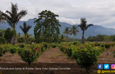 Peluang Kakao Indonesia Rambah Pasar Uni Eropa - JPNN.com