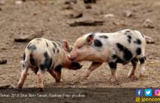 2019 Tahun Babi Tanah, Perpaduan Dua Elemen Negatif - JPNN.com
