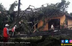 Waspada, Musim Hujan Banyak Pohon Tua Tumbang - JPNN.com
