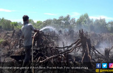 Kebakaran Lahan Gambut di Aceh Barat Makin Meluas - JPNN.com