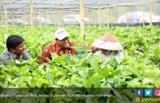 Gebrakan Mentan Andi Amran Bikin Neraca Perdagangan Pertanian Surplus - JPNN.com