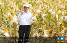 Musim Produksi Jagung, Indonesia Tidak Perlu Impor - JPNN.com