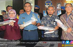 Penyelundupan Ribuan Bayi Lobster Digagalkan, Nilainya Fantastis - JPNN.com