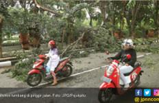 Fyuhhh...Ibu dan Anak Nyaris Tertimpa Pohon Tumbang - JPNN.com