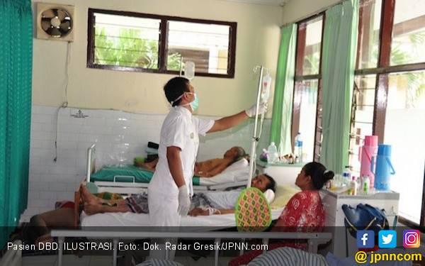 Lima Penderita DBD Meninggal Dunia di Jambi - JPNN.com