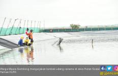 Tak Terdampak Pandemi, Disperindag Sulteng Ekspor 259,39 Ton Udang ke Jepang - JPNN.com