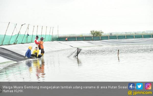 Geliat Muara Gembong di Area Hutan Sosial - JPNN.com
