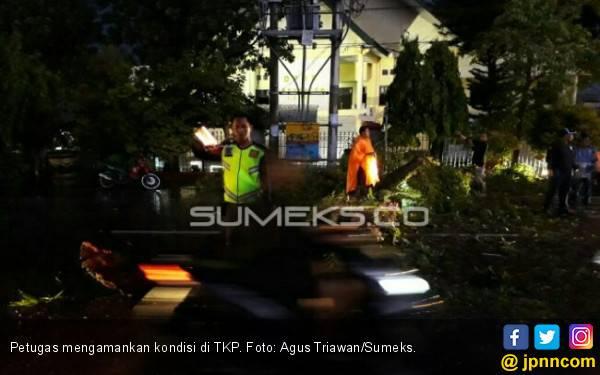 Seorang Pengendara Motor Tertimpa Pohon Tumbang di Lahat - JPNN.com