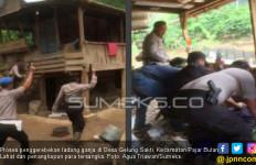 Polisi Temukan Ladang Ganja Seluas Setengah Hektare di Lahat - JPNN.com