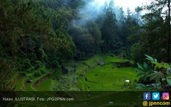 Bank Dunia Bantu KLHK Untuk Menata Hutan Kalimantan Timur - JPNN.com