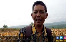 Petani Tuban Tolak Impor Jagung - JPNN.com