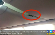 Insiden Kalajengking Naik Lion Air Jadi Sorotan Media Asing - JPNN.com