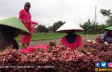 Kementan Ekspor Bawang Merah 250 Ton ke Singapura dan Thailand - JPNN.com