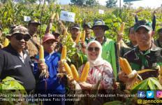 Panen Perdana, Petani Trenggalek Sukses Manfaatkan Lahan Kering Perhutani - JPNN.com